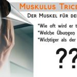 Musculus Triceps brachii: Der Trizeps